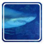 Great White Shark Invitation