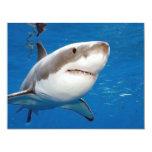Great White Shark Invite