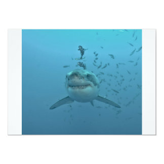 Great White Shark Isla Guadalupe Card