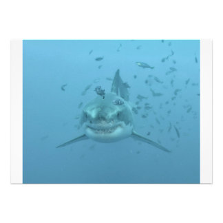 Great White Shark Isla Guadalupe Invites