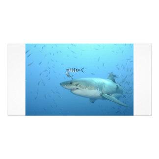 Great White Shark Isla Guadalupe Photo Greeting Card
