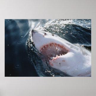 Great White Shark on sea Print