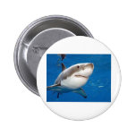 Great White Shark Pinback Buttons