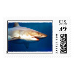Great White Shark Postage Stamp