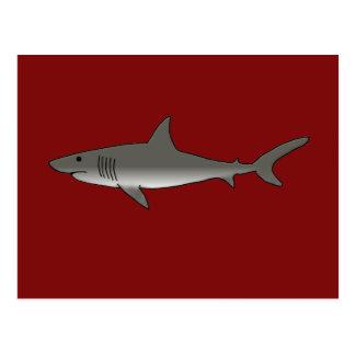 Great White Shark Post Card