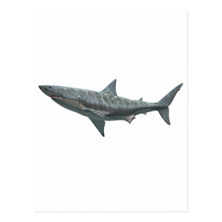 Great White Shark Postcard