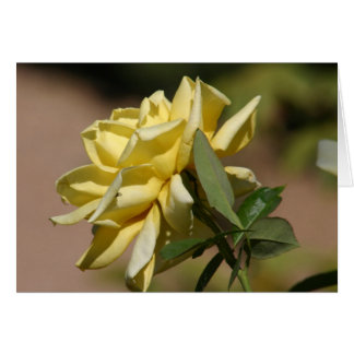 Great yellow rose card