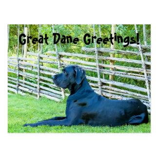 GreatDaneGreetingsPostcard Postcard