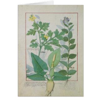 Greater Celandine or Poppy Card
