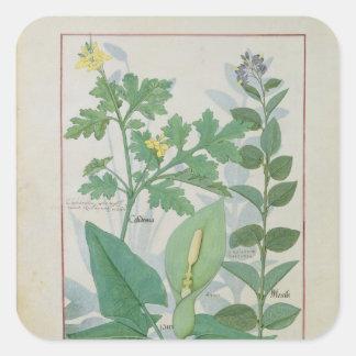 Greater Celandine or Poppy Square Sticker