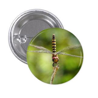 Greater Crimson Glider Dragonfly Button