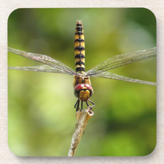 Greater Crimson Glider Dragonfly Coaster