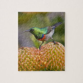 Greater Double-collared Sunbird feeds on 2 Jigsaw Puzzle