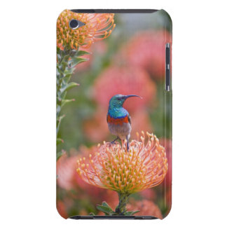 Greater Double-collared Sunbird feeds on iPod Touch Cover