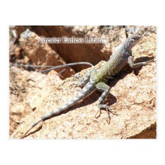 Greater Earless Lizard Post Card