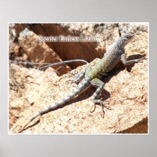 Greater Earless Lizard Poster