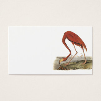 Greater Flamingo by Audubon Business Card