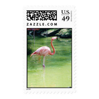 Greater Flamingo Stamp