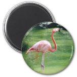 Greater Flamingo Refrigerator Magnet