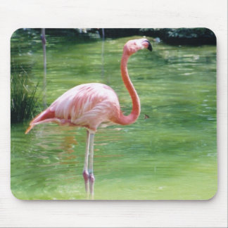 Greater Flmingo Mouse Pad