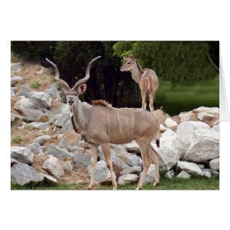 greater-kudu-10 card