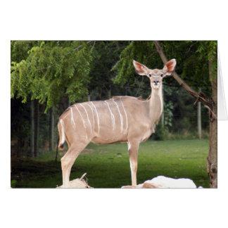 greater-kudu-11 card