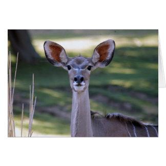 greater-kudu-12 card