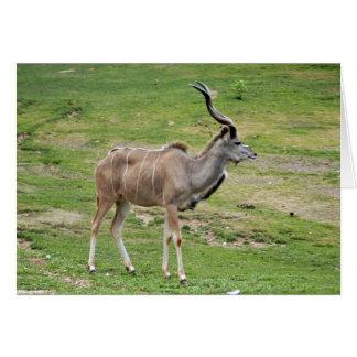 greater-kudu-5 card