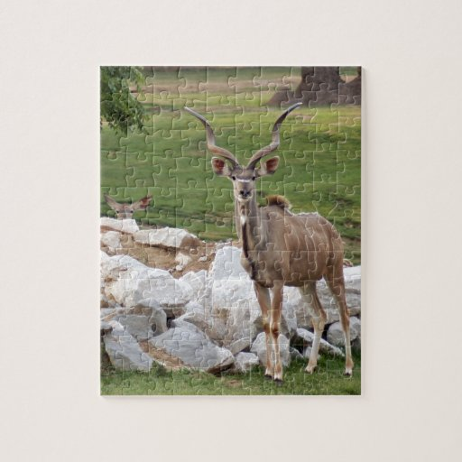 greater-kudu-8 puzzle con fotos