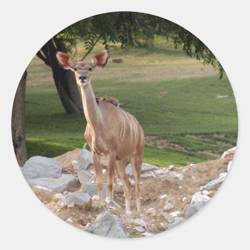 greater-kudu-8b pegatina redonda