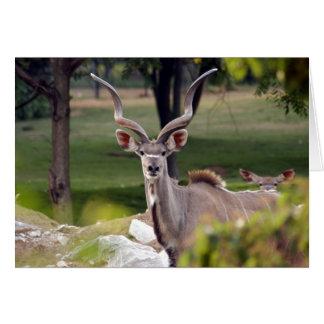 greater-kudu-9 card