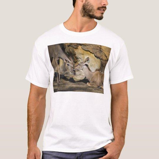 Greater Kudu Affection T-Shirt
