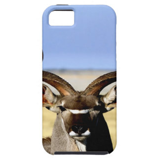 Greater Kudu bull  waiting for love iPhone 5 Case