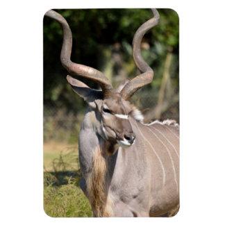 Greater Kudu Rectangular Photo Magnet