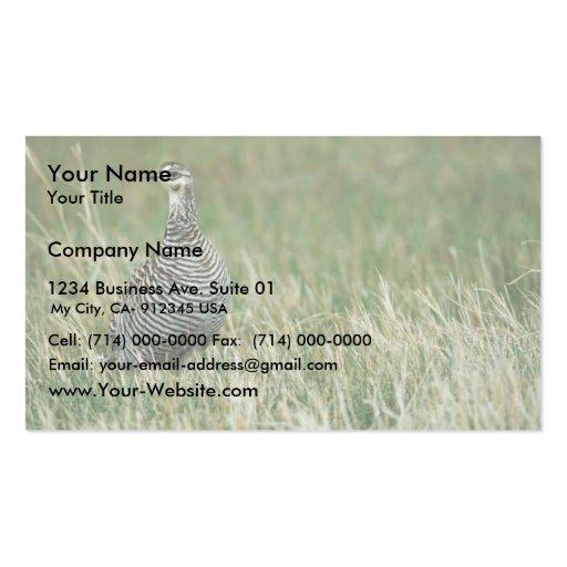 Greater prairie chicken business card