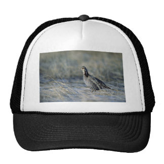 Greater prairie chicken trucker hat