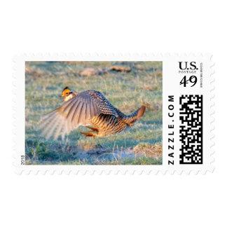 Greater Prairie Chicken Stamps