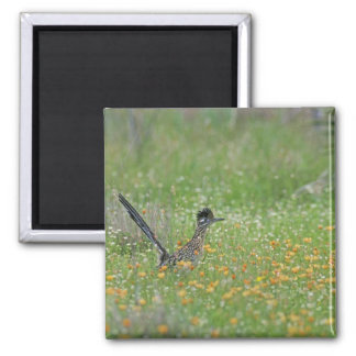Greater Roadrunner, Geococcyx 2 Inch Square Magnet