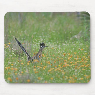 Greater Roadrunner, Geococcyx Mouse Pad