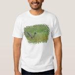 Greater Roadrunner, Geococcyx T Shirt