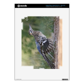 Greater Roadrunner in Texas 2 Decal For iPad 3