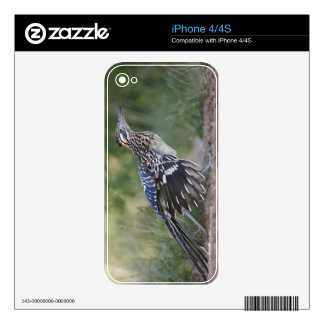 Greater Roadrunner in Texas 2 iPhone 4S Decal