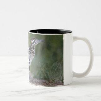 Greater Roadrunner in Texas 2 Two-Tone Coffee Mug