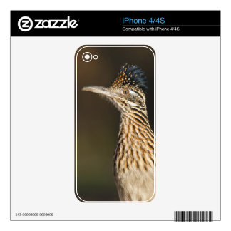 Greater Roadrunner in Texas Skins For The iPhone 4S
