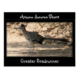 Greater Roadrunner Postcard