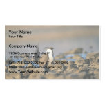 Greater sage grouse business card template