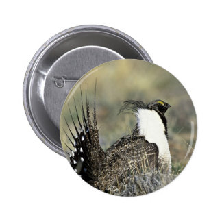 Greater sage grouse pinback buttons