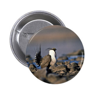Greater sage grouse buttons