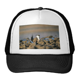 Greater sage grouse trucker hat