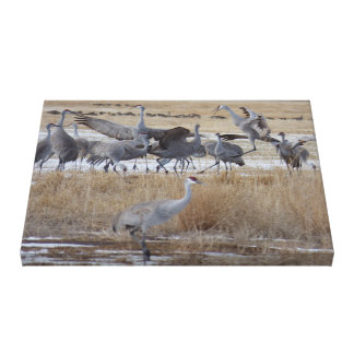 Greater Sandhill Cranes Wrapped Canvas